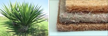 Сизаль - материал из листьев Агавы