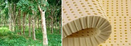 Натуральный латекс из сока дерева Гевея